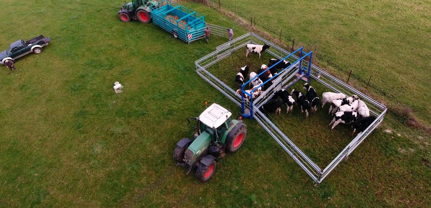 parc mobile de contention fractionné avec vaches à l'intérieur